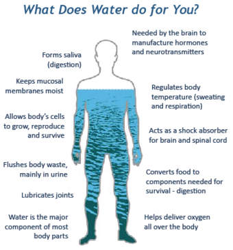 amount of water in a human body